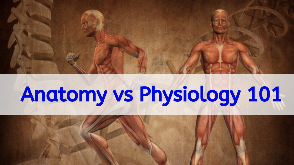 Anatomy vs Physiology 101: How can we make a difference between anatomy and physiology 1 - Daily Medicos