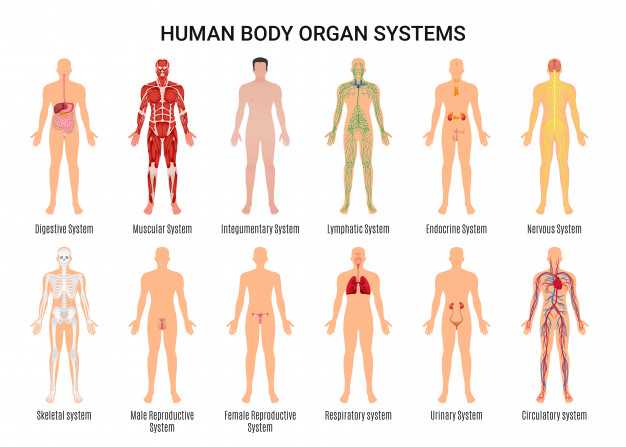 Anatomy vs Physiology 101: How can we make a difference between anatomy and physiology