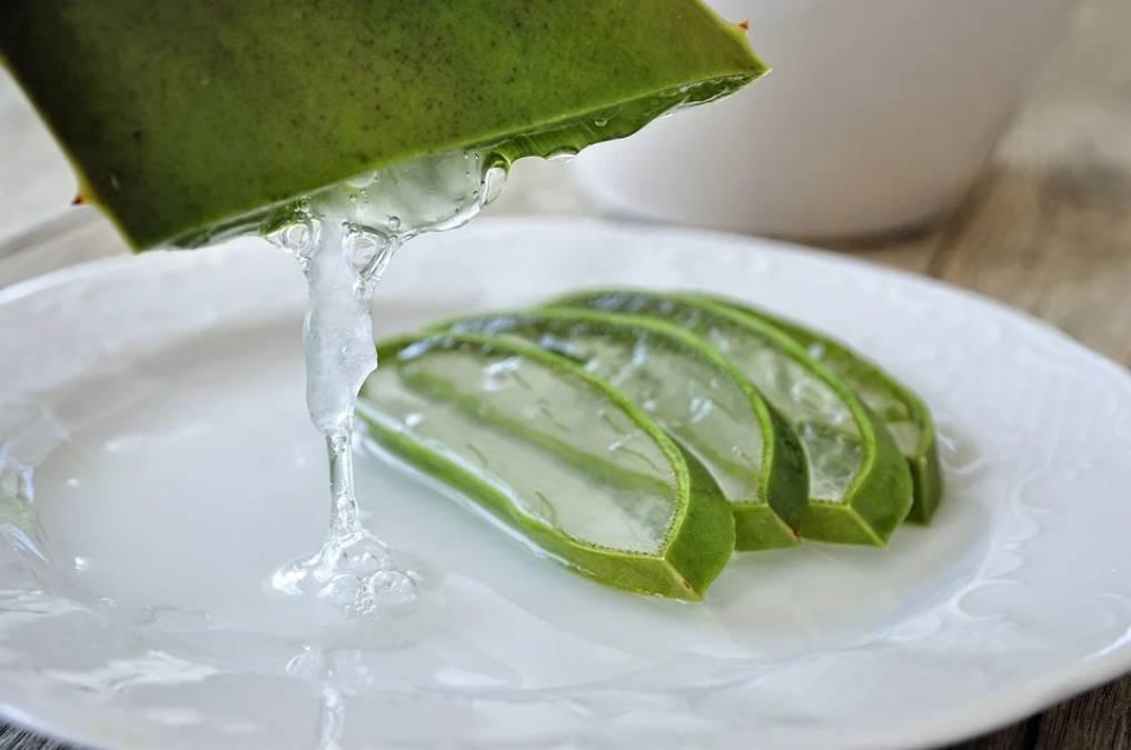 Aloe vera: benefits and uses of aloe vera 4 - Daily Medicos