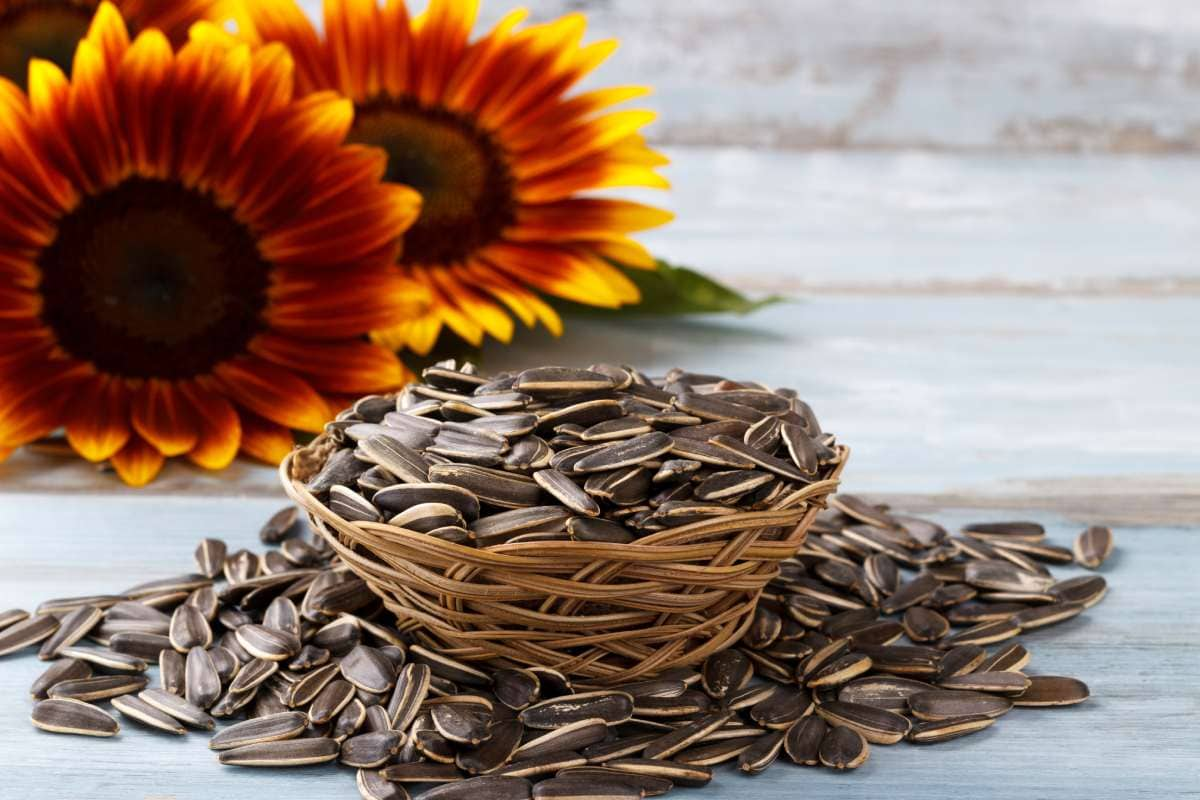 Nutritional and Health Benefits of Sunflower seeds that you never heard about. 1 - Daily Medicos