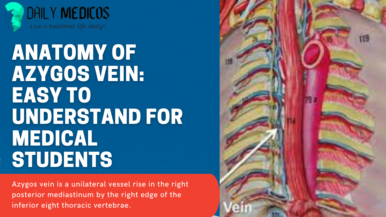 Anatomy of Azygos Vein: Easy to Understand for Medical Students 1 - Daily Medicos