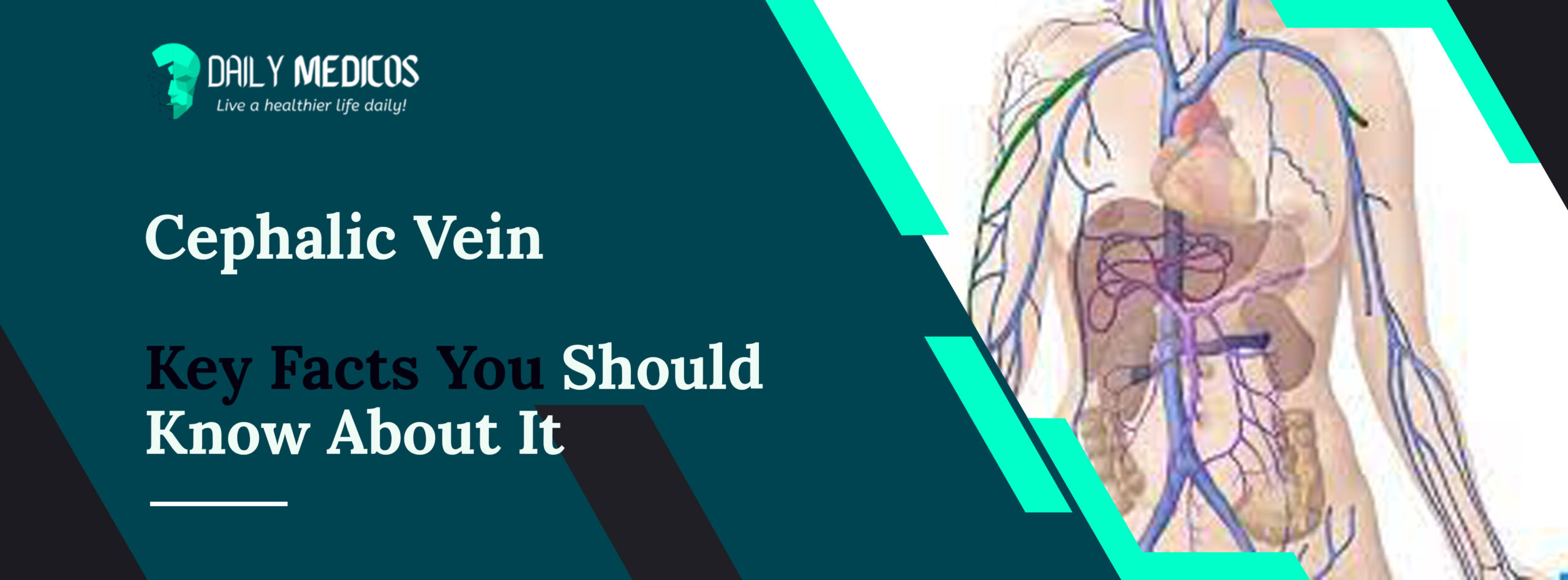 Cephalic vein [Key Facts You Should Know About It] 6 - Daily Medicos