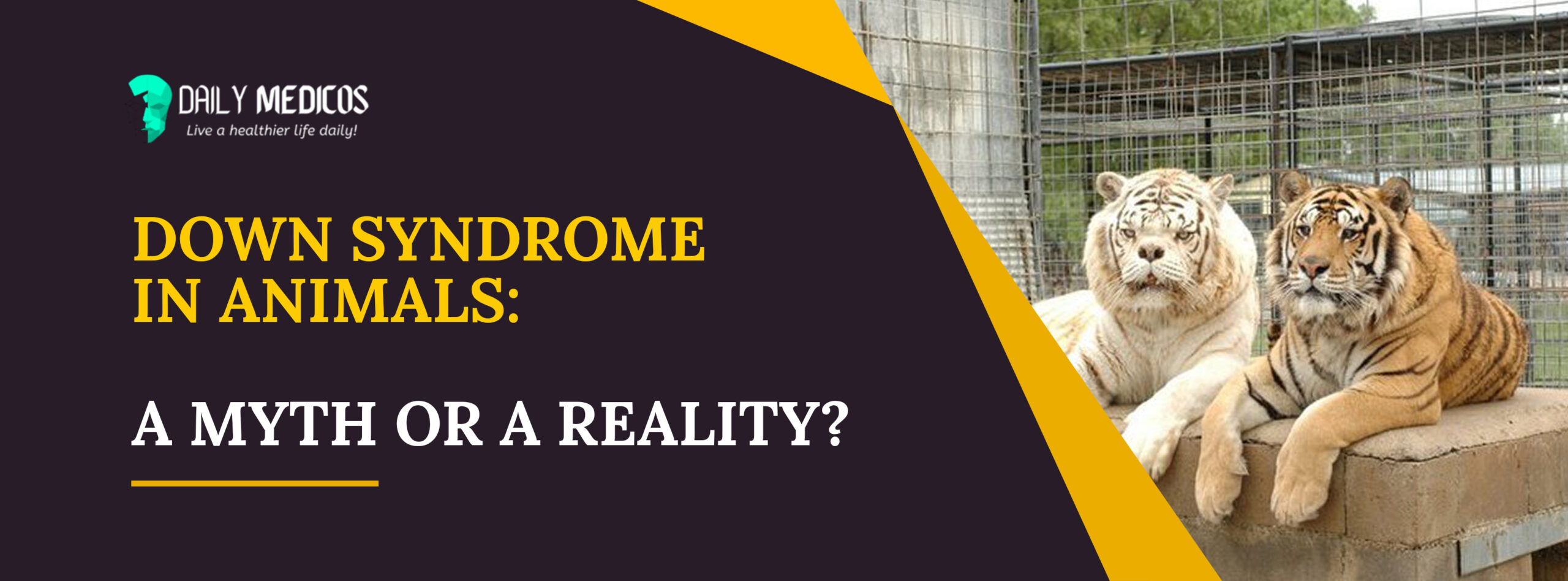 Down Syndrome In Animals: A Myth Or A Reality? 1 - Daily Medicos