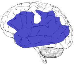 What is Agraphia or Aphasia 2 - Daily Medicos