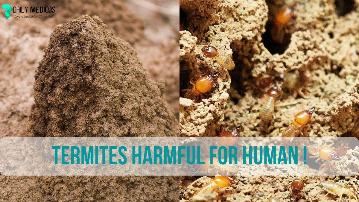Termites Harmful for Human