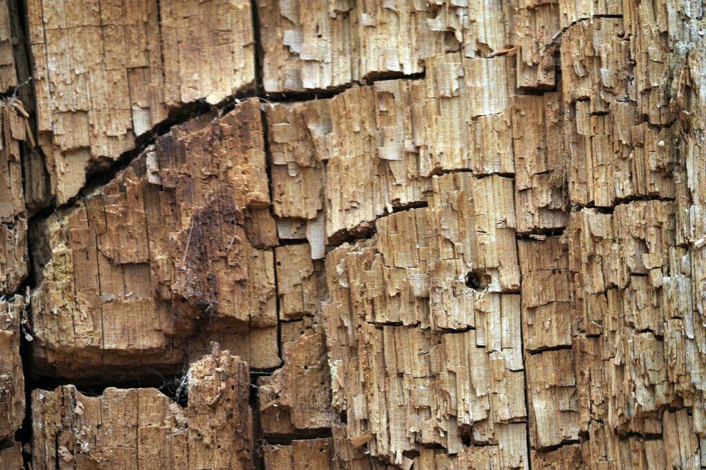 Termites Harmful for Human! 1 - Daily Medicos